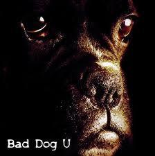 BAD DOG U  Bad Dog U.jpg